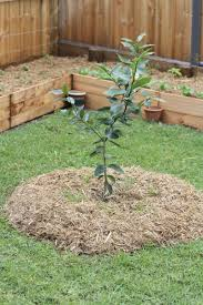 Backyard Garden Design Ideas Fruit Trees In Garden Design U2013 Ideas For Planting Fruit Trees In