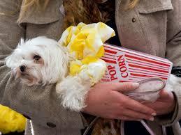 Popcorn Halloween Costume 16 Adorable Pets Dressed Food Halloween Maltese