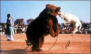 american pit bull terrier website american pit bull terrier history