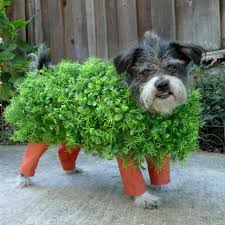 Halloween Costumes Dogs Cutest Puppy Costumes 2011 10 Hilarious Dog Costumes Budget