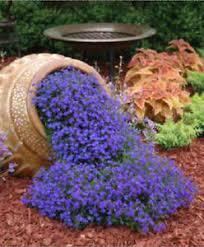 Rock Garden Cground Lobelia Lilac Cascade 200 Seeds Beautiful Ground Cover Rock Garden