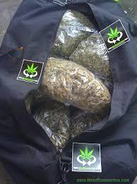 turkey bags got turkey bags marijuana cannabis hemp og kush weedconnection