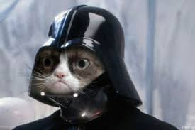 Create A Grumpy Cat Meme - create meme cat cat grumpy cat star wars pictures