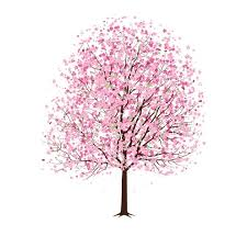13 cherry blossom tree designs images cherry blossom tree vector