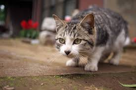 house plants safe for cats indoor plants expert