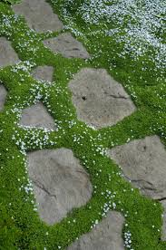 Backyard Ground Cover Ideas by Garden Design Garden Design With Florida Ground Cover Plants Ice