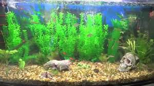 Fake Plants Artificial Plants For Tropical Fish Tank Youtube