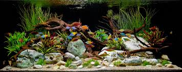 Aquascape Aquarium Designs Home Accessories A Classic Decorative Freshwater Aquascape