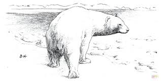 polar bear baby mother coloring pages free printables pdf