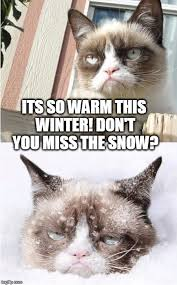 Grumpy Cat Snow Meme - grumpy cat toronto imgflip