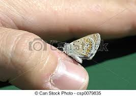 butterfly on finger a butterfly on a finger stock images