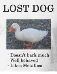 Lost Dog Meme - lost dog doesn t bark much well behaved likes metallica meme