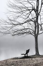 Key Bench Park Bench And Leafless Tree In Fog Hi Key Photograph By Greg