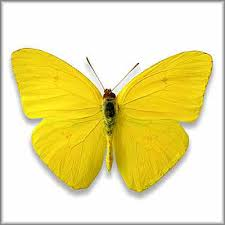 transmutation of the butterfly is the symbol of