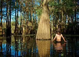 Louisiana travel tours images Louisiana three ways atchafalaya swamp intelligent travel jpg