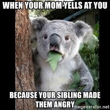 Angry Koala Meme - when your mom yells at you because your sibling made them angry