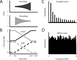 looming biases in monkey auditory cortex journal of neuroscience