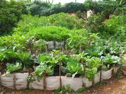 how to start a kitchen garden part 1 the alternative
