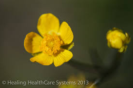 yellow flowers yellow flowers c a r e channel healing healthcare systems