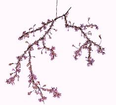 cherry blossoms in design