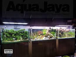 membuat aquascape bening aquajaya aquascaping indonesia home facebook