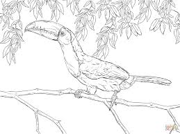 realistic keel billed toucan coloring page free printable