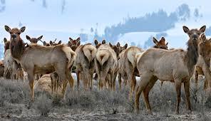 Jackson Hole Wyoming Map National Elk Refuge In Jackson Hole Wyoming My Yellowstone Park
