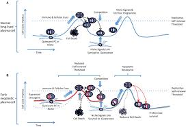 Cell Cycle Concept Map Frontiers A Replicative Self Renewal Model For Long Lived Plasma