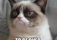 Grumpy Cat New Years Meme - white male kitten names best cat information 2018