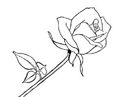 imagenes para colorear rosas dibujo de rosa para colorear dibujos net