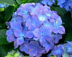 Poisonous Garden Flowers by 100 Poisonous Garden Flowers 15 Poisonous Plants Youtube