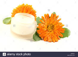 calendula flowers marigold salve with calendula flowers and leaves stock photo