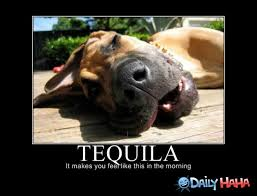 Funny Tequila Memes - ugh tequila