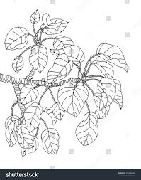 jungle leaf coloring page virtren com