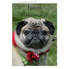 happy anniversary pug cards greeting photo cards zazzle