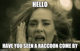 Meme Ge - adele hello meme generator imgflip
