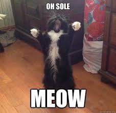 Opera Meme - oh sole meow opera cat quickmeme