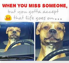 Missing Someone Meme - nandog pet gear on twitter when missing someone meme aww