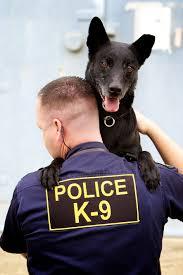 belgian malinois vest police k9 u0027s meca wisconsin police canine vest foundation inc