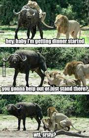 Lion Sex Meme - helping out like a man imgur