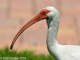 Florida Backyard Birds - the freiday bird blog august 2014