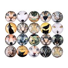 random cat pictures promotion shop for promotional random cat