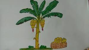 how to draw an banana tree how to draw a cartoon banana tree how