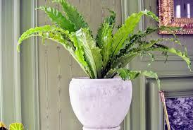 decorating with houseplants the martha stewart blog