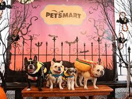 Pet Halloween Costumes This Year U0027s Top Pet Halloween Costume Trends Abc News
