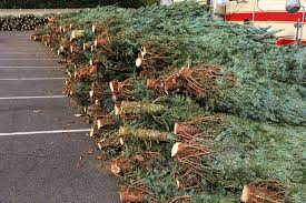 christmas tree sale christmas trees for sale best 28 christmas christmas tree sale