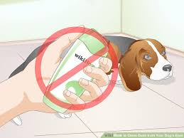 Blind Dog Eye Discharge 3 Ways To Clean Gunk From Your Dog U0027s Eyes Wikihow