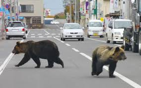woman u0027killed by bear u0027 in japanese mountains amid concern over