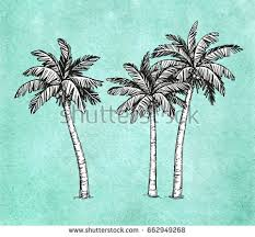 summer style vector with coconut tree download free vector art