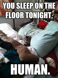 Funny Sleep Memes - animal memes you sleep on floor funny memes